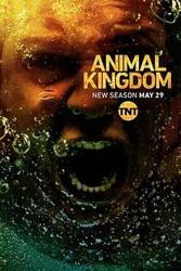 野兽家族 第三季 Animal Kingdom Season 3_海报