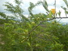 Hiking Tin Shui Wai - 頁 14 Df77a2909203384
