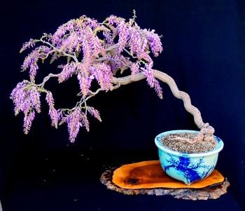 Come avete iniziato a fare bonsai? - Pagina 3 64f18d695712473