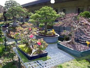 Come avete iniziato a fare bonsai? - Pagina 3 810f94695712643