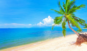Тропический остров и пляж / Beautiful tropical island and beach 7763371190116294