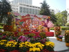 新春舞獅 2009 2490ff752564253
