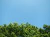 Hiking Tin Shui Wai - 頁 14 3e6e0c924955834