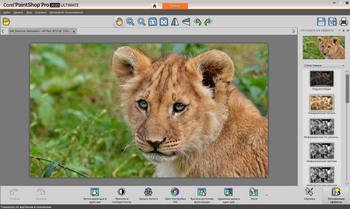 Corel PaintShop 2020 Pro 22.0.0.112 Ultimate (MULTI/RUS/ENG)