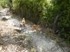 Hiking 2012 June 16 - 頁 4 17df9f875662854