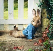 Приключения Кролика Питера / Peter Rabbit (2018)  25e21e816385773