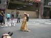 Songkran 潑水節 4964c1813644223