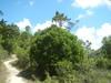 Hiking 2012 June 16 - 頁 4 4b2683875697974