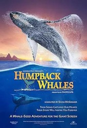 座头鲸 Humpback Whales