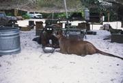Остров Маккинси / Mc Cinsey's island (Халк Хоган, 1997)  B2403f942821074