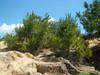 Hiking 2012 June 16 - 頁 4 Ce56e5875718184