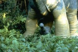 Динозавр: Тайна затерянного мира / Baby: Secret of the Lost Legend/ (1985) Шон Янг 6215b3859588284