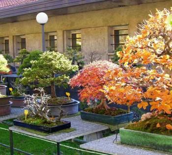 Come avete iniziato a fare bonsai? - Pagina 3 B113a5695711623