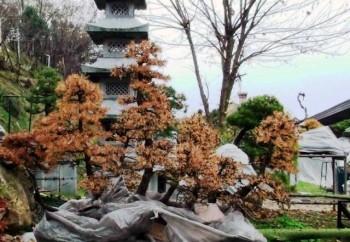 Come avete iniziato a fare bonsai? - Pagina 3 F53a18695712183