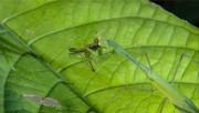 Upiorne robale / Monster Bug Wars (2009-2012) PL.720p.HDTV.x264-eend / Lektor PL