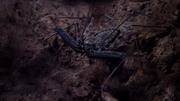 Mikropotwory. Opowiada David Attenborough / Micro Monsters With David Attenborough (2014) PL.1080p.bluray.x264-eend / Lektor PL + Napisy PL