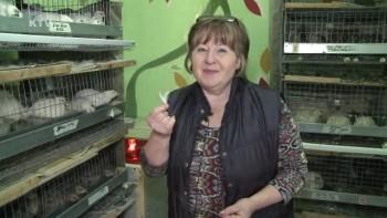 Разведение перепелов от А до Я (2014) Видеокурс