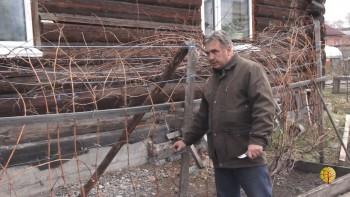 Проращивание черенков, выращивание винограда (Вебинар)