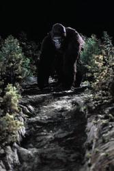 КИНГ КОНГ ЖИВ ! / King Kong lives ! (1986) Линда Гамильтон 77140c1376283979