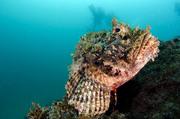 Подводный мир / Underwater life 0e9f071352976071