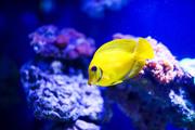 Подводный мир / Underwater life 51e0001352976106