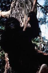 КИНГ КОНГ ЖИВ ! / King Kong lives ! (1986) Линда Гамильтон 7907861376284023