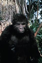 КИНГ КОНГ ЖИВ ! / King Kong lives ! (1986) Линда Гамильтон 2d8fdd1376284275