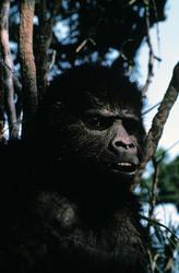 КИНГ КОНГ ЖИВ ! / King Kong lives ! (1986) Линда Гамильтон 28340b1376283922
