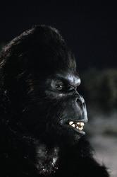 КИНГ КОНГ ЖИВ ! / King Kong lives ! (1986) Линда Гамильтон 3d976f1376284218