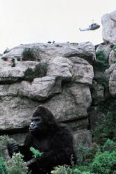 КИНГ КОНГ ЖИВ ! / King Kong lives ! (1986) Линда Гамильтон 84ebe51376283987