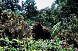 КИНГ КОНГ ЖИВ ! / King Kong lives ! (1986) Линда Гамильтон 7b2d291376282861