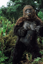 КИНГ КОНГ ЖИВ ! / King Kong lives ! (1986) Линда Гамильтон 1595cf1376283932