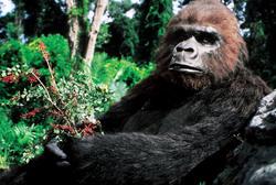 КИНГ КОНГ ЖИВ ! / King Kong lives ! (1986) Линда Гамильтон Effd151376282828