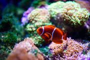 Подводный мир / Underwater life 004f411352976115