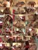 Gina Lynn - Shows Off Her Tits (2020 AddictedToBoobs.com ClubRedLight.com) [FullHD   1080p  1.38 Gb]