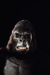 КИНГ КОНГ ЖИВ ! / King Kong lives ! (1986) Линда Гамильтон 04c78c1376283964