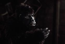 КИНГ КОНГ ЖИВ ! / King Kong lives ! (1986) Линда Гамильтон 9b4d221376284124