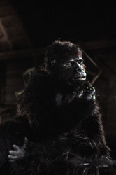 КИНГ КОНГ ЖИВ ! / King Kong lives ! (1986) Линда Гамильтон 92f0641376284240
