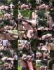 Mistress Nikki - Alfresco Double Domme Pegging Wl1467 (2020 MistressNikkiWhiplash) [FullHD   1080p  318.68 Mb]