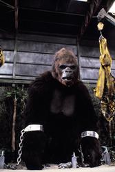 КИНГ КОНГ ЖИВ ! / King Kong lives ! (1986) Линда Гамильтон D7bc091376284175