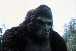 КИНГ КОНГ ЖИВ ! / King Kong lives ! (1986) Линда Гамильтон 6e883f1376284042