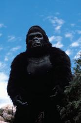 КИНГ КОНГ ЖИВ ! / King Kong lives ! (1986) Линда Гамильтон Ea5edd1376284188