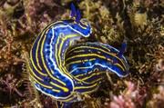 Подводный мир / Underwater life 6113101352976080