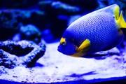 Подводный мир / Underwater life Bf45411352976110