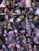 Roxy Lace - Plenty of bukkake facials for Roxy Lace and Piggy Mouth (2020 SplatBukkake.com UKxxxPass.com) [FullHD   1080p  844.9 Mb]